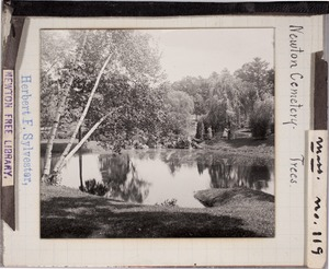Newton photographs collection, lantern slides - Newton Cemetery. Trees -