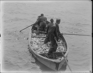 Men fishing - boat filled with fish
