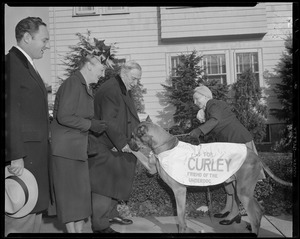 James Michael Curley w/great dane during campaign