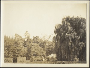 Distant view of garden and willow trees