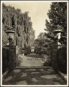 Ashdale Farm. View from gated entrance to rose garden; willows on left