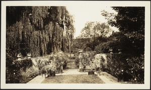 Ashdale Farm. View of rose garden towards gate entrance; willows on left