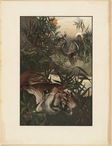 Shere Khan in jungle