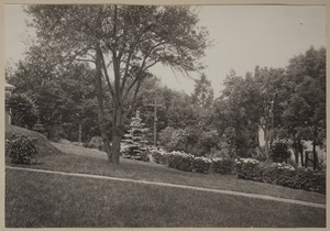 Photograph Album of the Newell Family of Newton, Massachusetts - Grounds of Plimpton and Newell Residence, 87 Chestnut St. West Newton, Massachusetts -