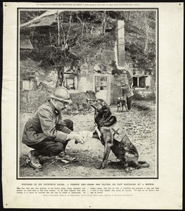 French Red-Cross Dog, World War I