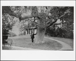 C.C. Greenwood, Town Clerk of Needham, with the Greenwood Oak in front of his home