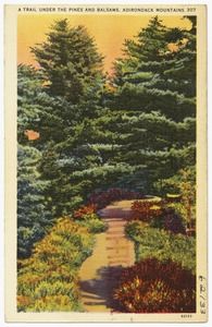 A trail under the pines and balsams, Adirondack Mountains