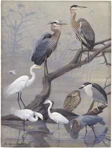 Panel 22: Great Blue Heron, American Egret, Black-crowned Night Heron, Snowy Egret, Little Blue Heron
