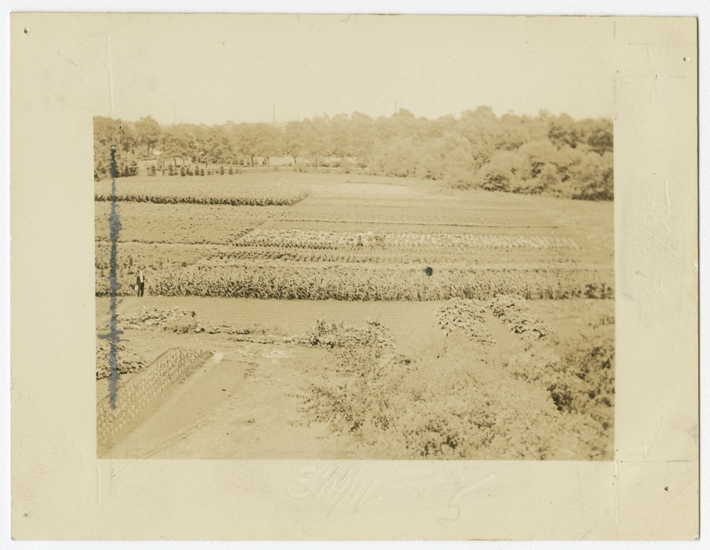 Agricultural Fields, Perkins School for the Blind