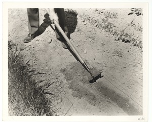 Hoeing with a Guide Wire, Perkins School for the Blind