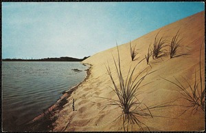 Beach grass and the sand dune at the water's edge. Cape Cod.