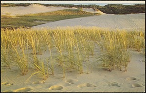 Typical view of sand dunes, Cape Cod National Seashore