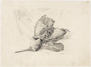 "Study for ""Woodcock"""