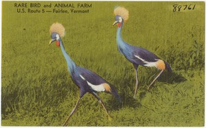 Rare Bird and Animal Farm, U. S. Route 5 -- Fairlee, Vermont