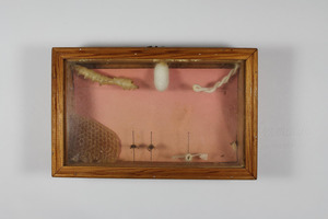 Display box containing insects and related items