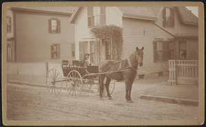 Dog and horse carriage