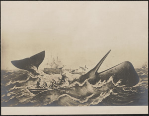 Sperm whaling, the capture