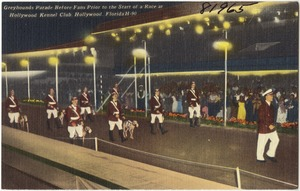 Greyhounds parade before fans prior to the start of a race at Hollywood Kennel Club, Hollywood, Florida
