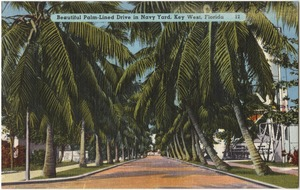 Beautiful palm-lined drive in Navy yard, Key West, Florida