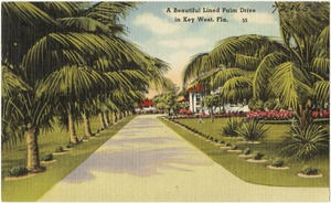 A beautiful lined palm drive in Key West Fla.