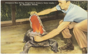 Dangerous, man killing alligators at Casper's Gator Jungle, St. Augustine, Florida