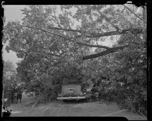 Fallen tree covering part of a vehicle
