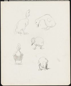 Sketches of ducklings