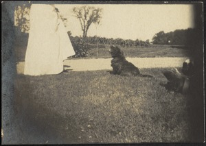 Dog at feet of woman in white dress in field
