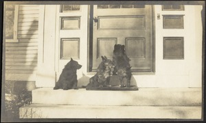 Dogs on front porch