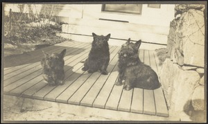 Three dogs on front porch