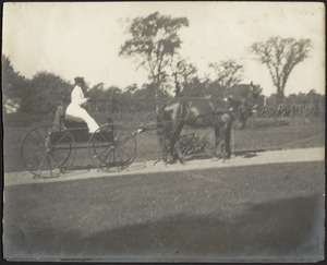 Ashdale Farm. Woman in buggy pulled by two horses, possibly Gertrude S. Kunhardt.