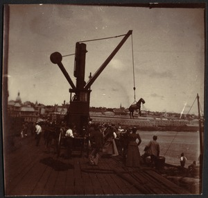 Crowded dock in harbor, horse being lifted by crane onto ship below
