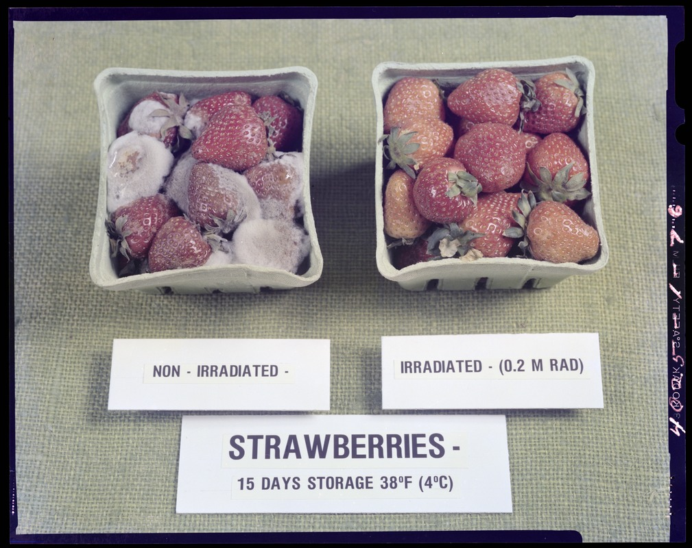 Strawberries, non-irradiated and irradiated