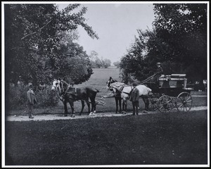 Miss Kate Cary: driving a horse-drawn carriage