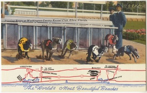 The world's most beautiful beaches. Starting boxes at Washington County Kennel Club, Elbro, Florida