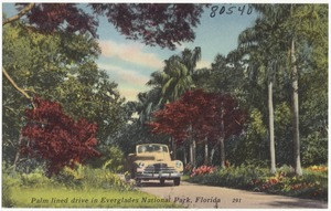 Palm lined drive in Everglades National Park, Florida
