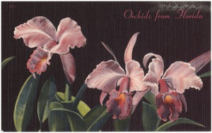 Orchids from Florida