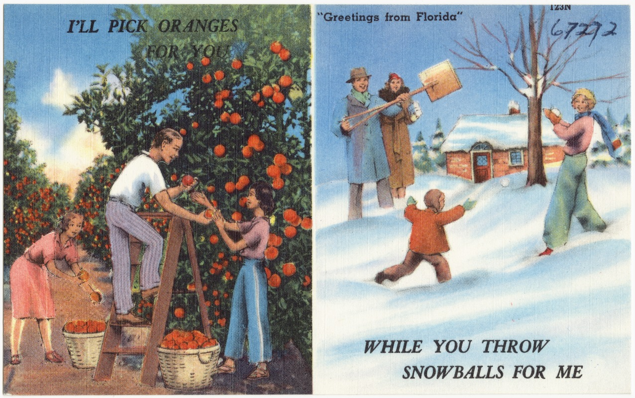 Greetings from florida ill pick oranges for you while you greetings from florida ill pick oranges for you while you throw snowballs for me kristyandbryce Image collections