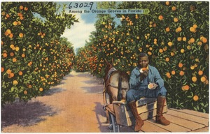 Among the orange groves in Florida