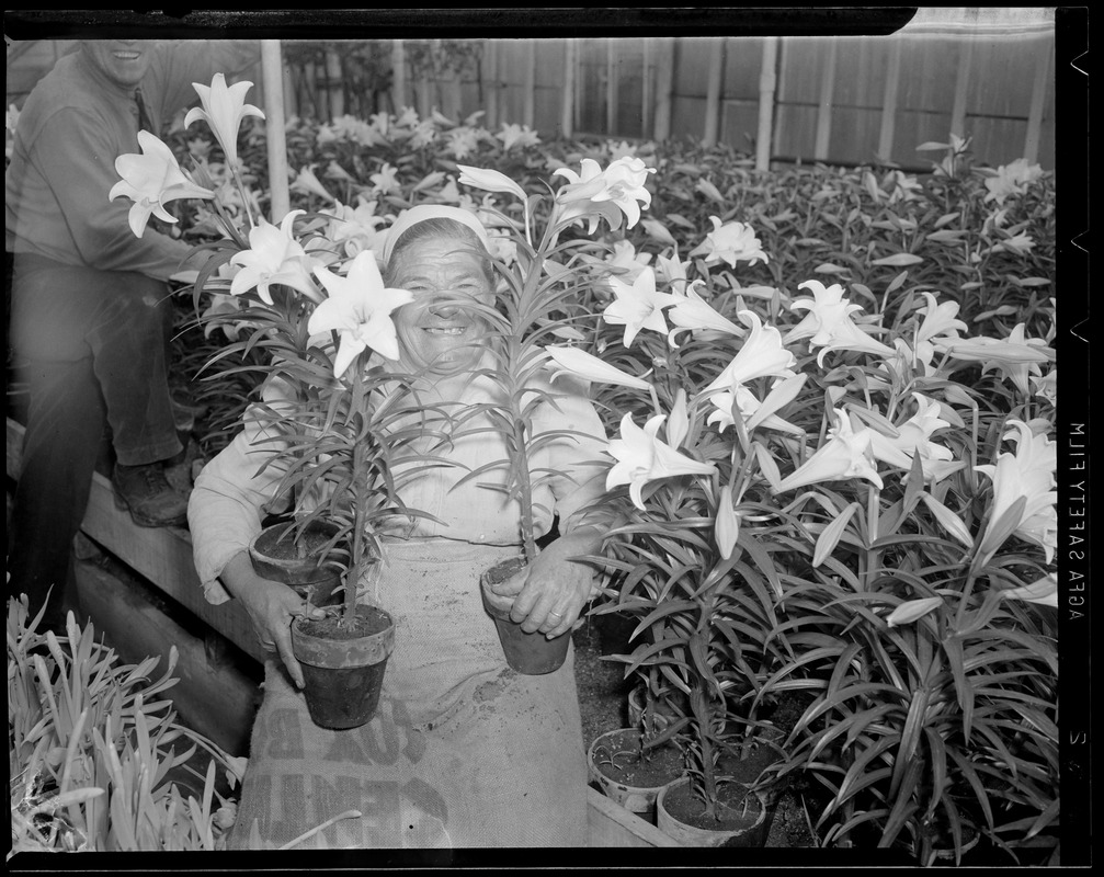 Woman in greenhouse with lilies
