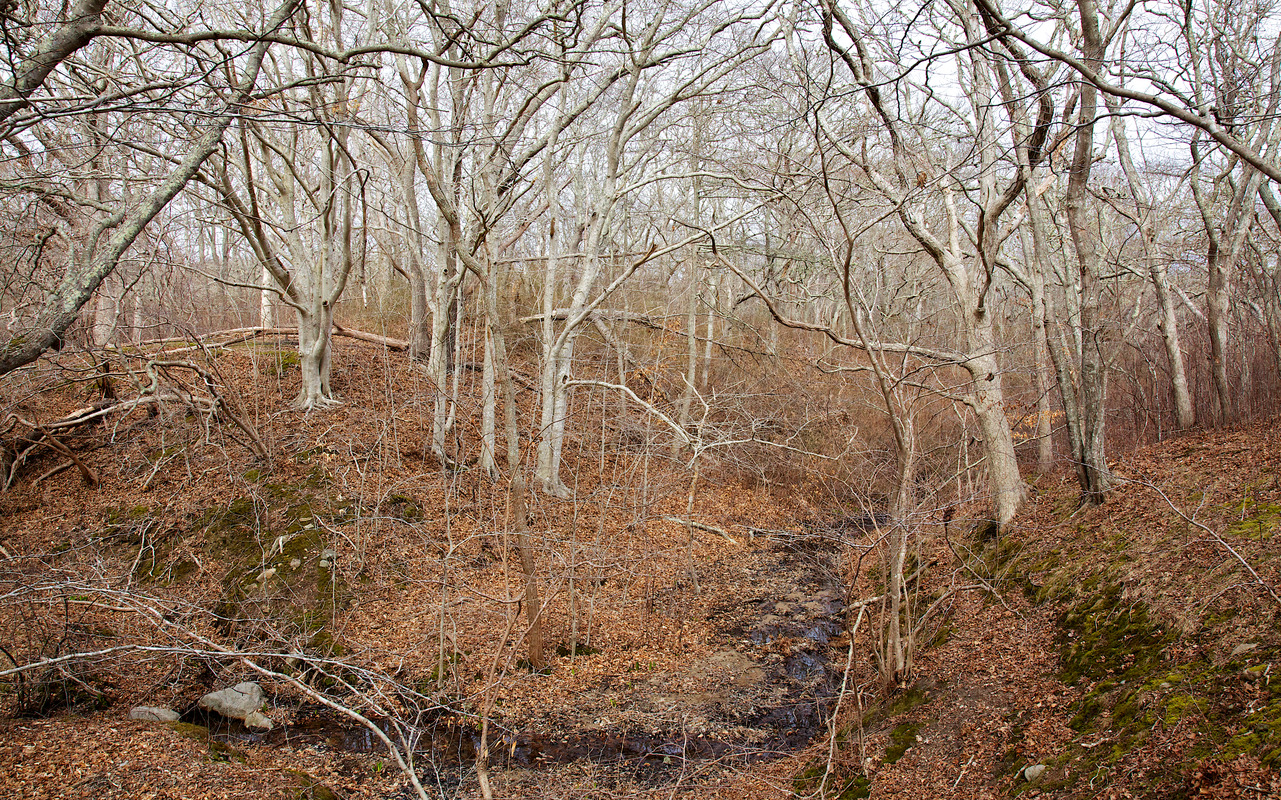 Beech Woods - Gay Head Moraine