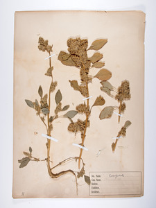 2 herbaceous plants, composite