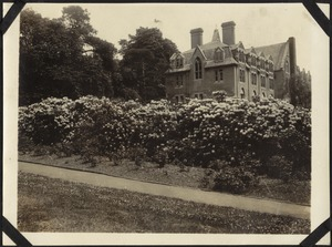 Rhododendron Hedge, The Royal Normal College for the Blind, England