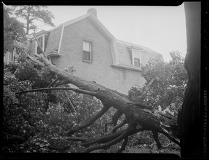 Tree limb falls on house during storm
