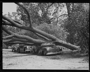 Tree toppled by hurricane crushes auto