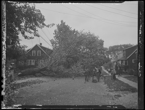 Trees downed by storm