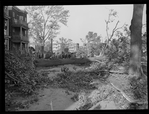 Trees uprooted during Hurricane of 38