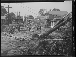 Downed trees, Hurricane of 38
