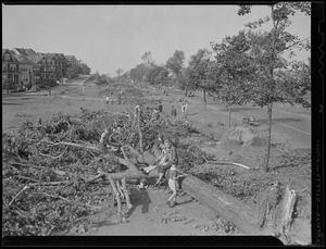 Trees fall in park, Hurricane of 38