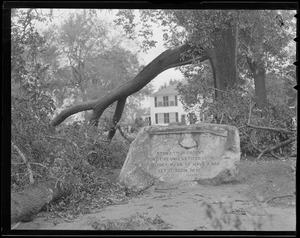 Trees damaged next to Minuteman monument, Lexington, Hurricane of 38
